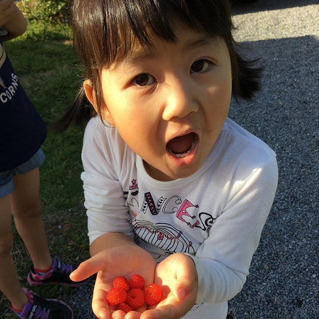 ゴールデンウィーク突入初日はバレーボールの練習でした娘ちゃん🏐私達も一緒にお茶当番夕方はワンワンと遊びがてらみんなでお庭で野いちご探し#フレンチブルドッグ#ブリンドル#野いちご#大型連休 (Instagram)