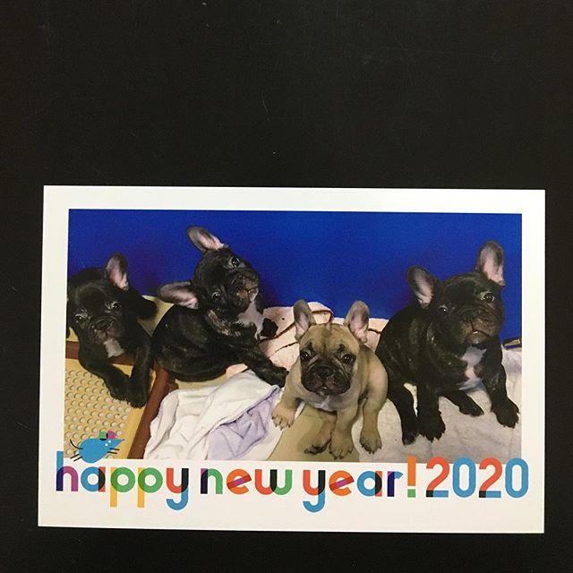 明けましておめでとうございます️昨年はお世話になりありがとうございました今年も笑顔いっぱいの素敵な年になりますようにどうぞよろしくお願いします♂️ #フレンチブルドッグ#4姉妹#娘ちゃん#妹ちゃん